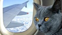 animali aereo