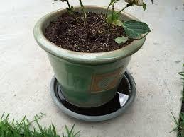 ristagno d'acqua vasi
