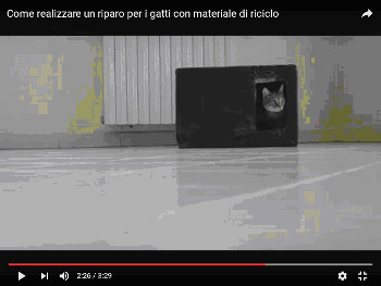 video gatti