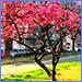 La QUATTRO e la città, calendario 2021 online