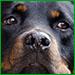 Aree cani, le regole