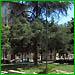 Riqualificazione giardino piazza Peyron