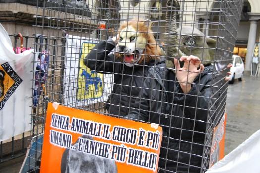 http://www.comune.torino.it/cittagora/uploads/no_agli_animali_nei_circhi.jpg