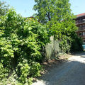Mongreno Foto 03