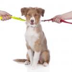Custody-of-the-dog