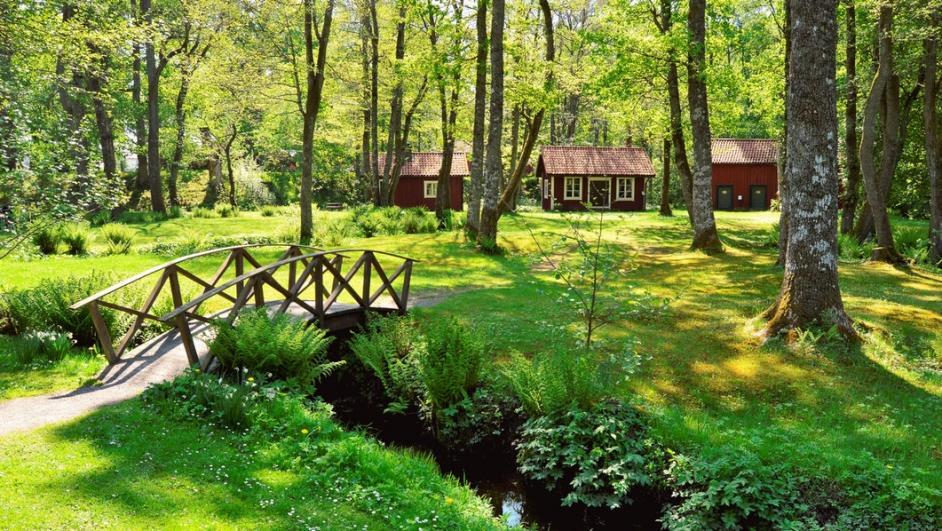 boschi in Svezia