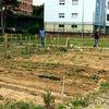Progetto AgroBarriera | Boschetto di Via Petrella | Maggio 2016-9